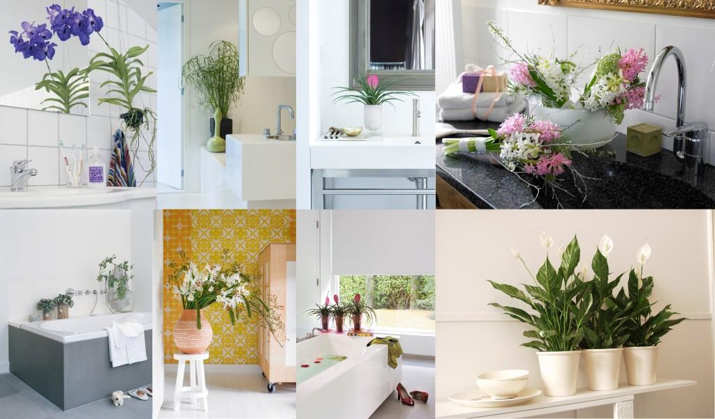 Pflanzen im Badezimmer: Orchidee, Begonie, Schwertlilie, Tillandsie, Hyazinthe, Einblatt